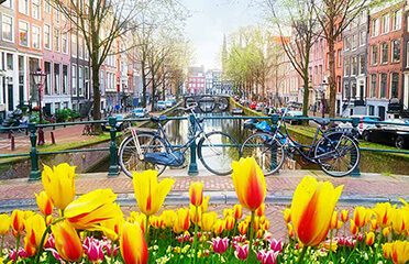 tulips in holland theme cruise
